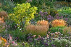 Gräser mit Präriestauden imSpätsommmer © Cassian Schmidt
