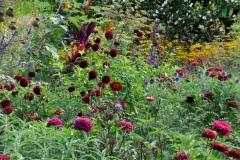 Dahlia 'Maroon Fox', Zinnia 'Weinrot', Salvia 'Amistad', Foeniculum, Cynara © Cassian Schmidt