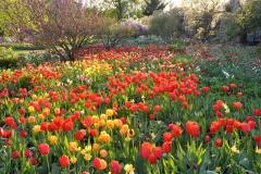 Rot - Orange - Gelb ist der vorwiegende Farbeindruck, der in der frühen Blühphase vorherrscht, wie bei einem pointilistischen Bild erschwimmen die Übergänge.© Cassian Schmidt