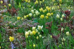 Spring-Green-Yellow-Spring-Green  @ Cassian Schmidt