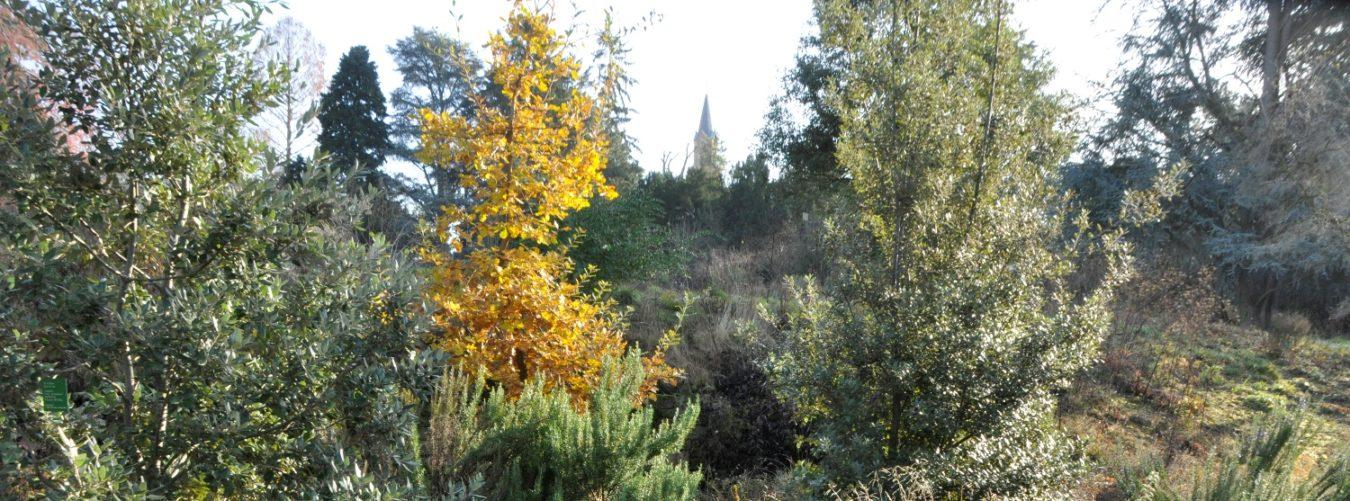 Schau und Sichtungsgarten Hermannshof